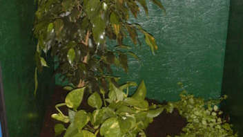 Trimeresurus Albolabris Weisslippen Bambusotter Haltungsberichte
