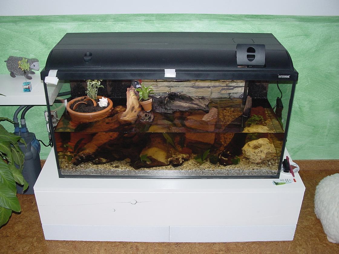 wie werde ich beschlagene scheiben los das aquaterrarium aquarium. Black Bedroom Furniture Sets. Home Design Ideas