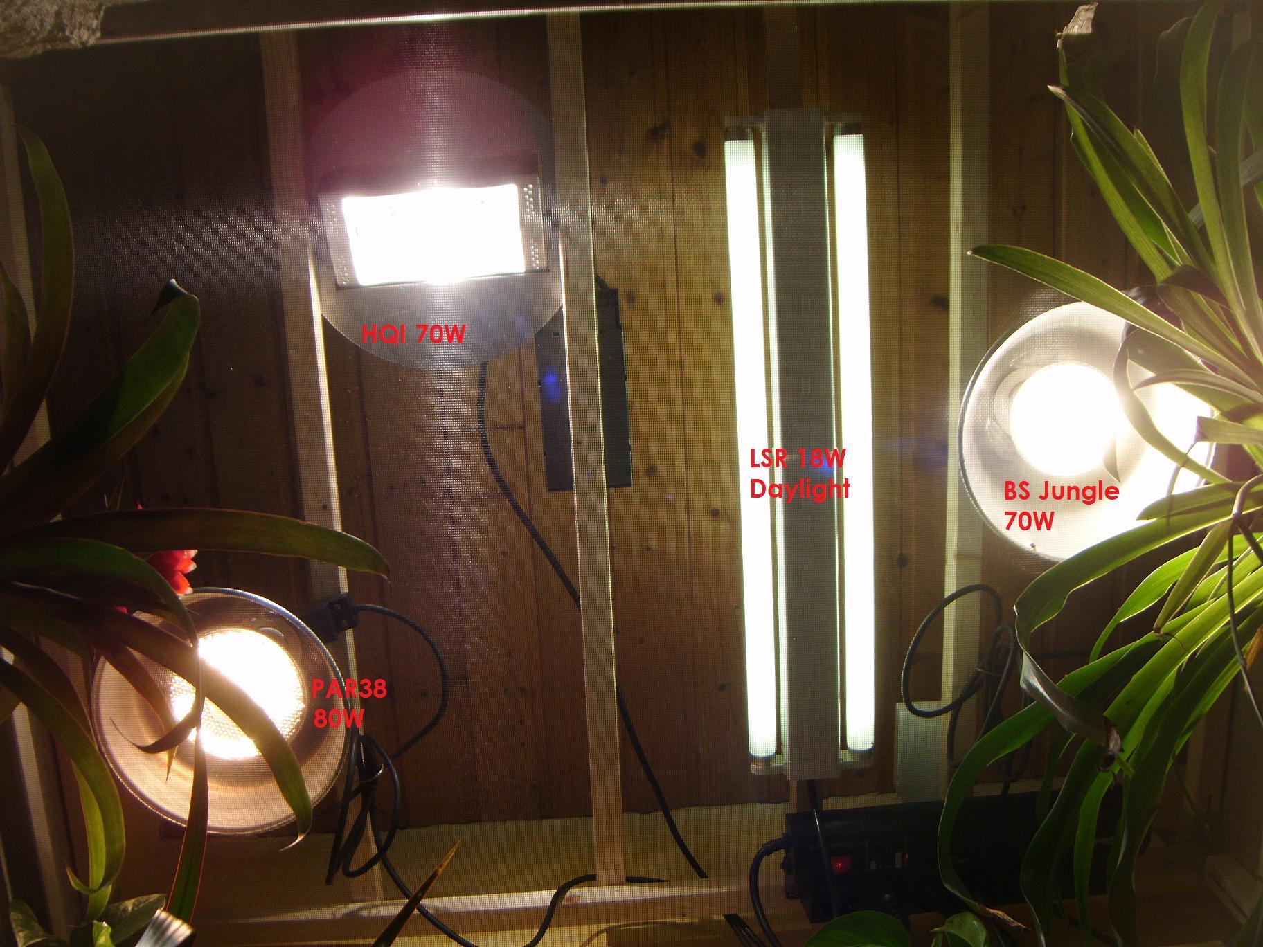 Pretty Terrarium Beleuchtung Chamäleon Bilder Galerie >> Chamaleon ...