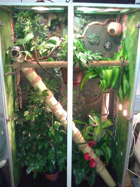 hilfe bei kronengecko terrarium terrarien weitere geckoarten. Black Bedroom Furniture Sets. Home Design Ideas