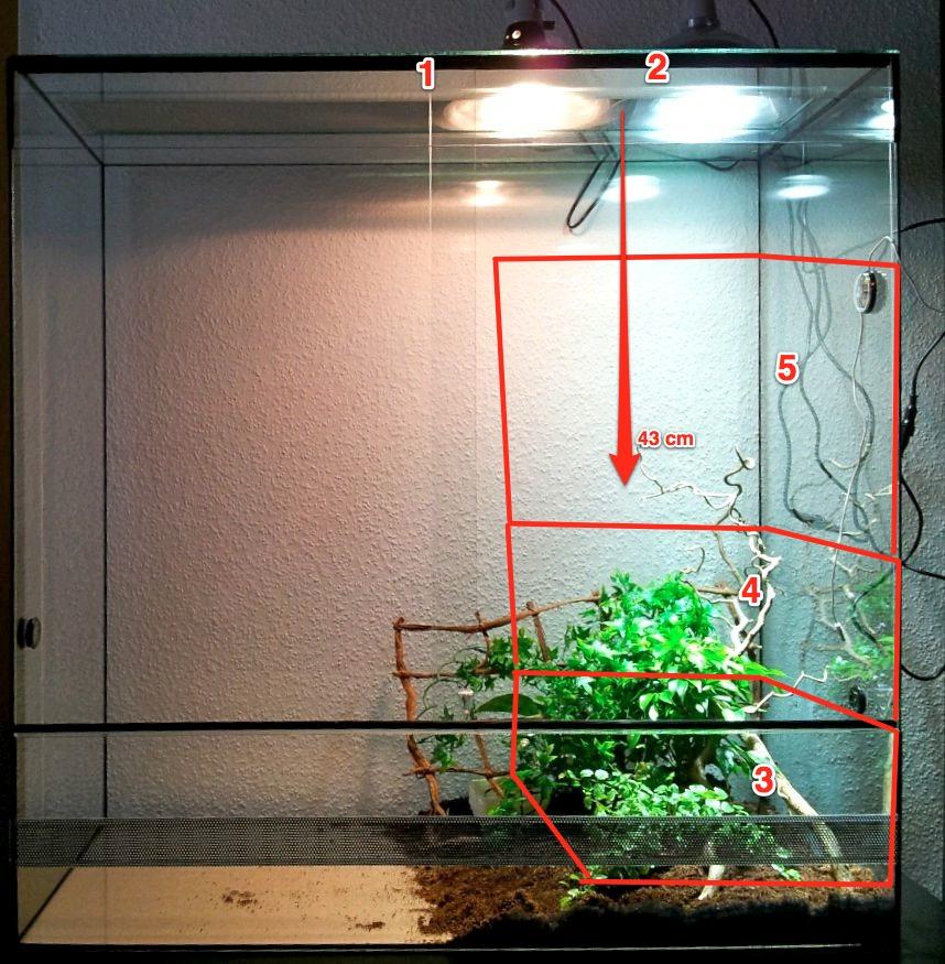beleuchtung aufzucht terrarium terrarien cham leons. Black Bedroom Furniture Sets. Home Design Ideas