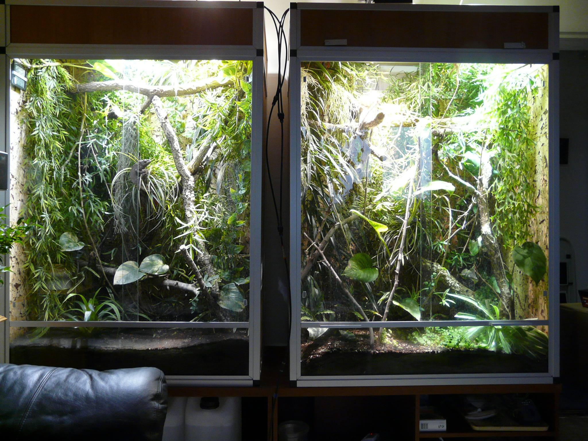 Beleuchtung Chamaleon ~ Hausdesignweb.co