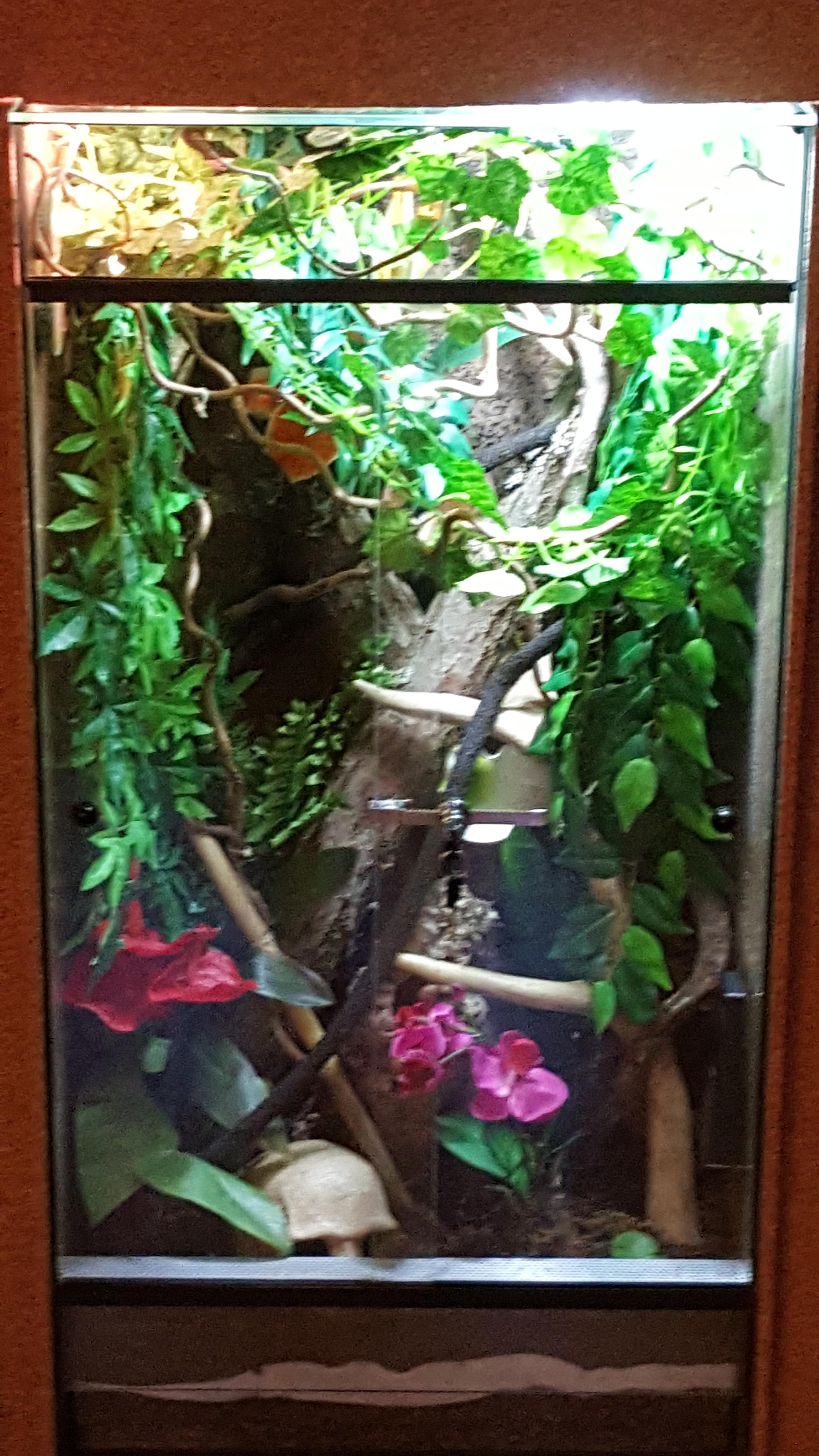 kronengecko allgemeine fragen weitere geckoarten. Black Bedroom Furniture Sets. Home Design Ideas