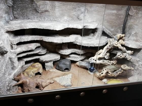 Leopardgeckos Rückwand