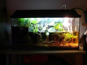 Aquaterrarium - Bombina Orientalis 1.