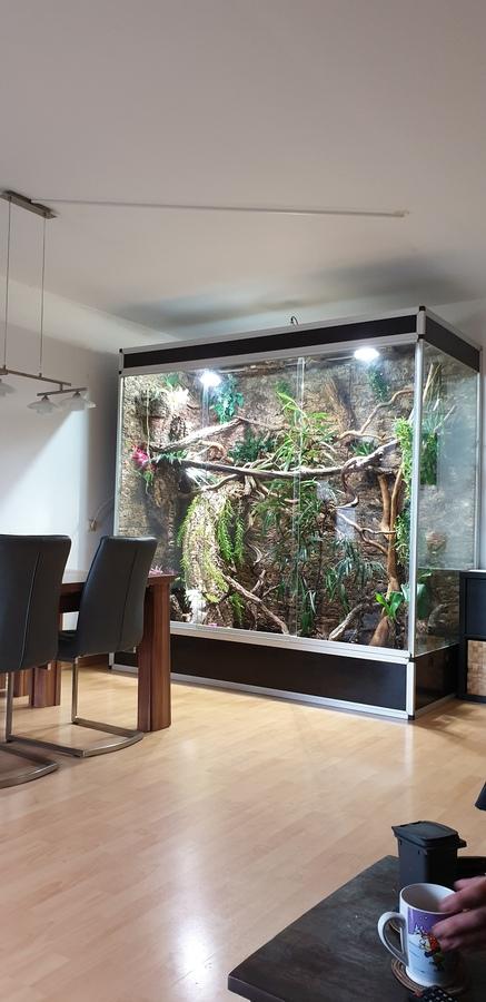 Neue Terrarium für 1.1 Varanus prasinus