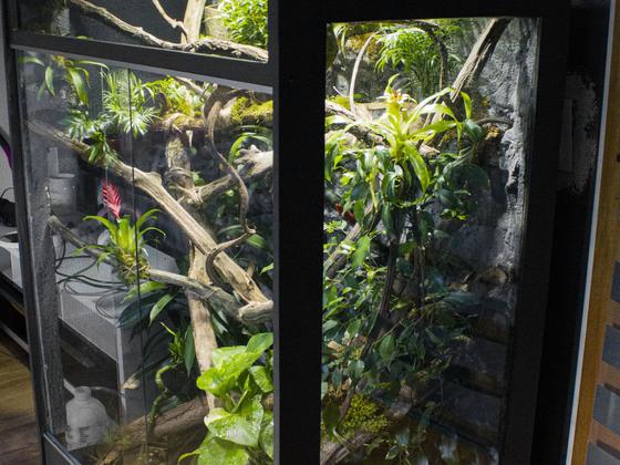 Seitenansicht vom Terrarium