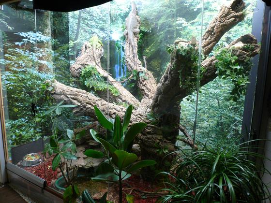 Regenwaldterrarium Eindruck