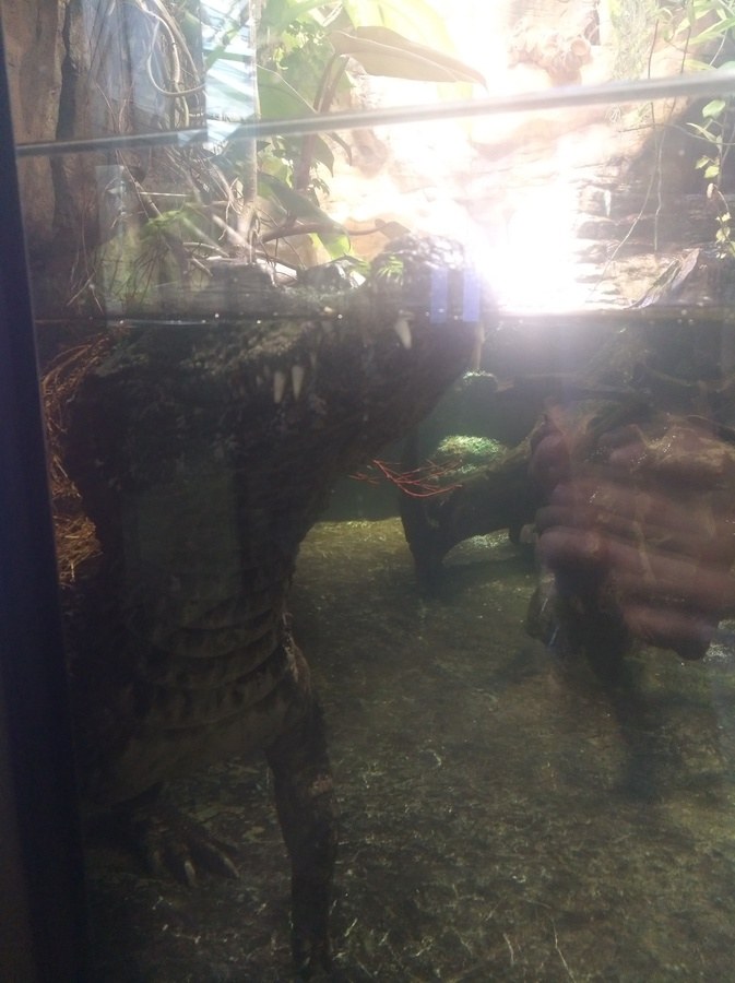 Fotos aus dem Aquarium Berlin
