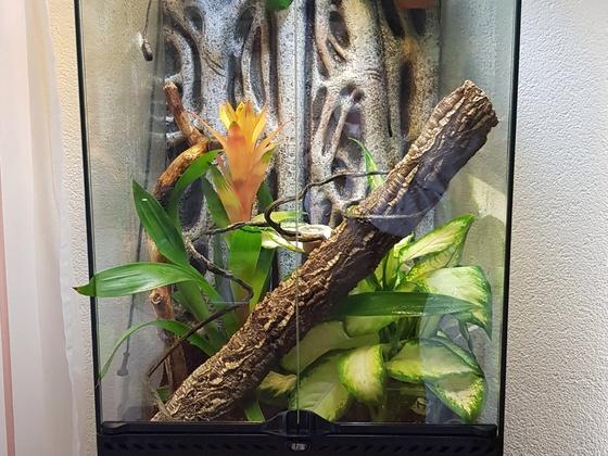 Neues Zuhause für meinen Kronengecko