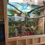 Regenwald-Terrarium für Grüne Leguane