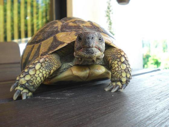 1. Foto meines neuen Mitbewohner