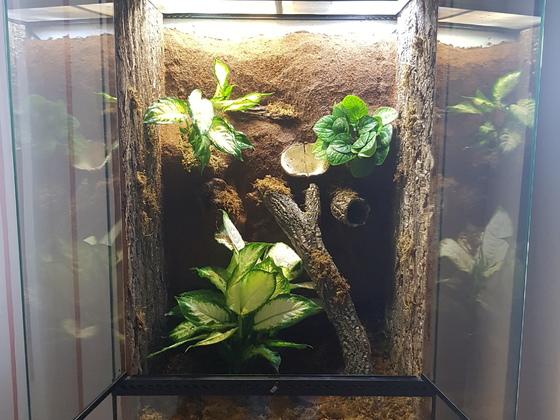 Kronengecko Terrarium