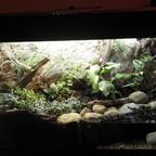 Bodendecker Aqua-Terrarium