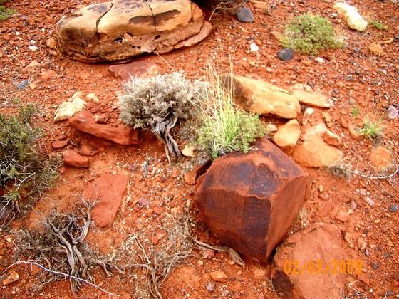 """auriceps""-Biotop, Nähe Castle Dome, Staatsgrenze Utah/Colorado"