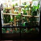 Phelsuma grandis Terrarium
