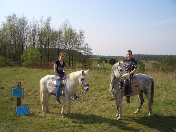 Ponys Mira und Nico
