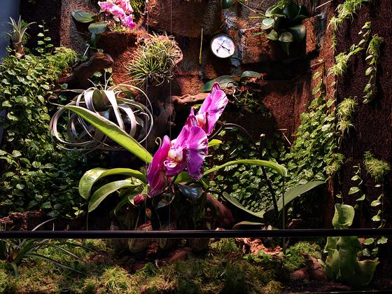 Regenwaldterrarium 4 Monate alt