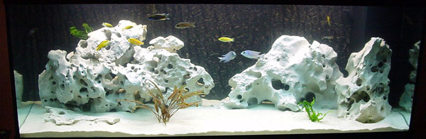 400 liter malawisee aquarium. Black Bedroom Furniture Sets. Home Design Ideas