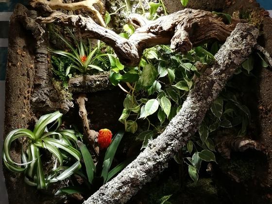 Noch unbewohntes Kronengecko-Terrarium