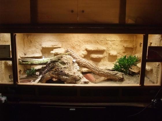 Terrarium für 1,0 Pogona henrylawsoni