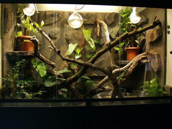 Terrarium meiner grünen Wasseragamen