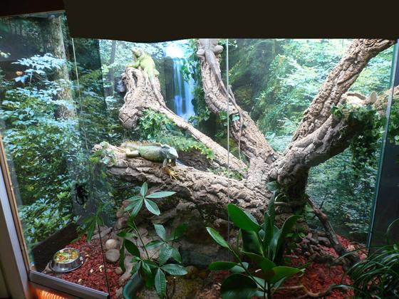 Regenwaldterrarium Überblick