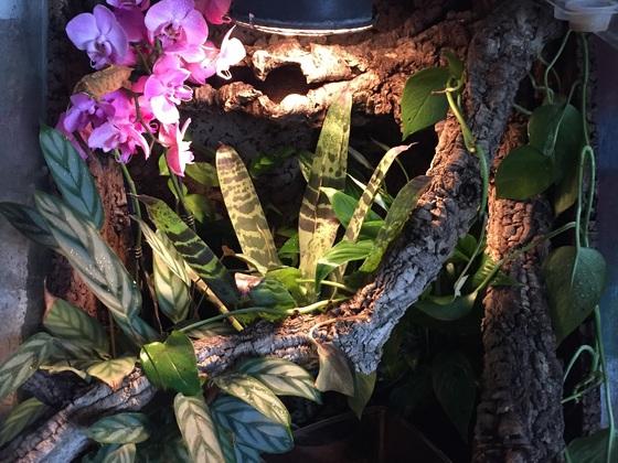 Mein Kronengecko Terrarium