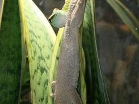 Zeit für Geckozärtlichkeiten