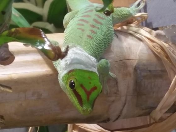 Gecko Mode