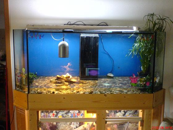 Aqua terrarium für mein Krokodil .-)