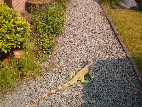 Hagrid im Garten bei einem Ausflug.
