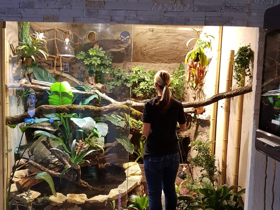 Wasseragamen Regenwaldterrarium Tropenterrarium xxl Terrarium