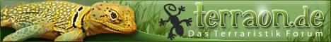Halsbandleguane im Terraristik Forum .. Haltungsberichte, Fragen zur Gesundheit, Fragen zur Ernährung, Fragen zur Fortpflanzung uvm .. bei Terraon.de
